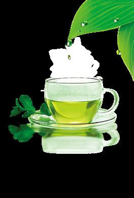 綠茶飲品保健養生