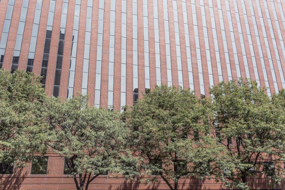 高楼幕墙树木
