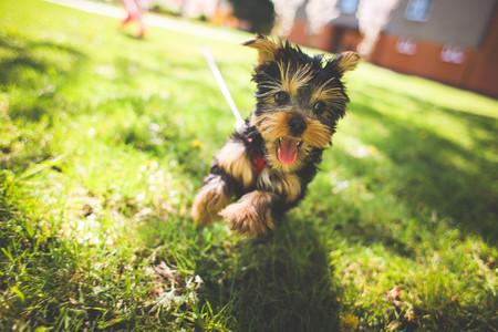 疯狂奔跑的小狗