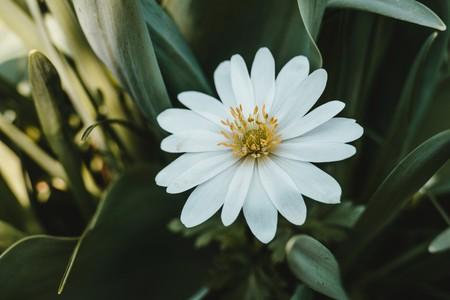 微距白色野花