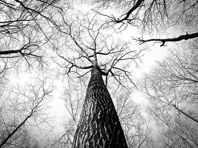 森林参天大树