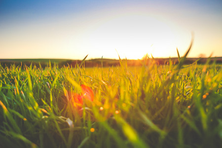陽光下的草地