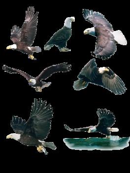 企业文化翱翔的雄鹰